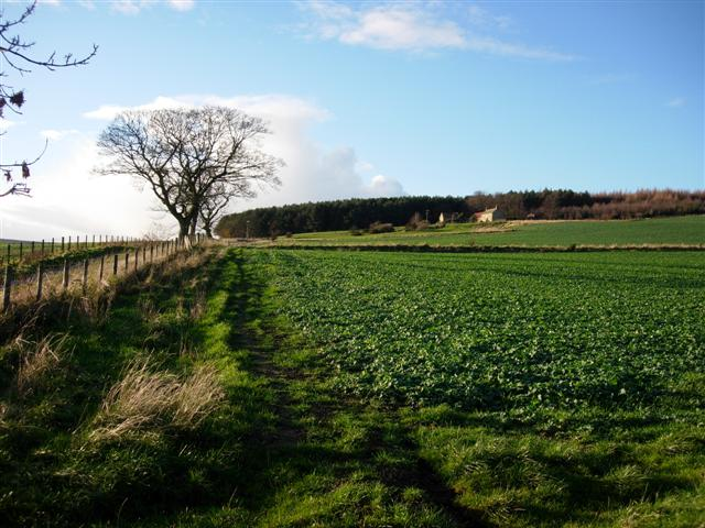 View over farmland to Weather Hill House and Wood