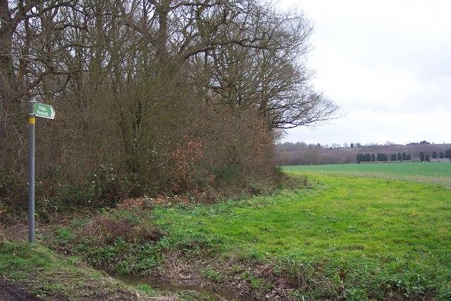 Footpath on the wood's edge