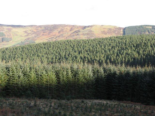 Elibank Forest