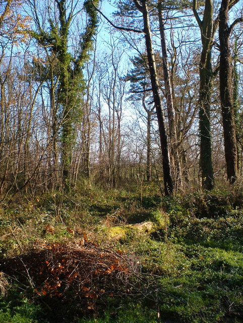 Roxton Wood