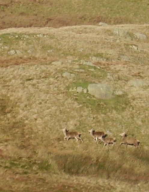 Red Deer, Todcrags