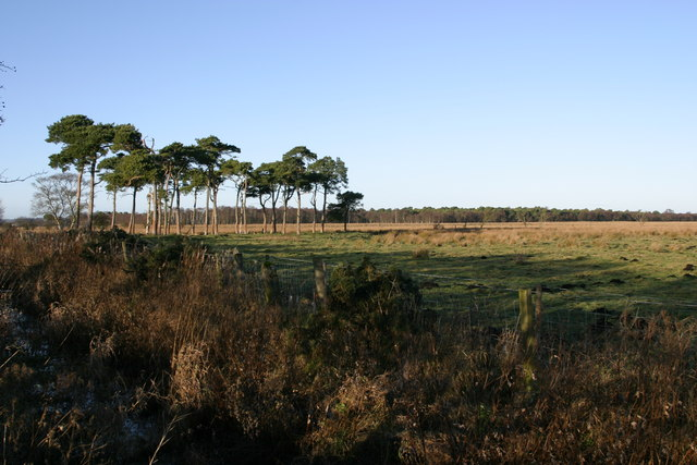 Prestwick Carr looking towards Carr Plantation