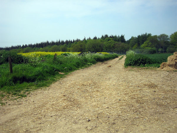 Track to Great Coll Wood