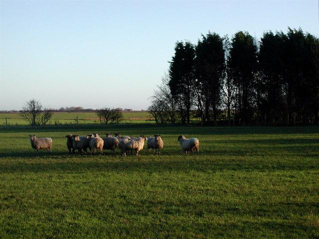 The Marsh, Keyingham