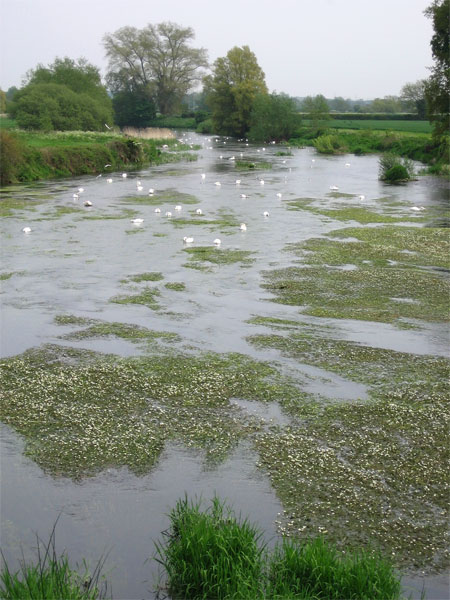 The Stour at Crawford Bridge
