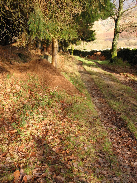 Low Park plantation, Duddon Valley