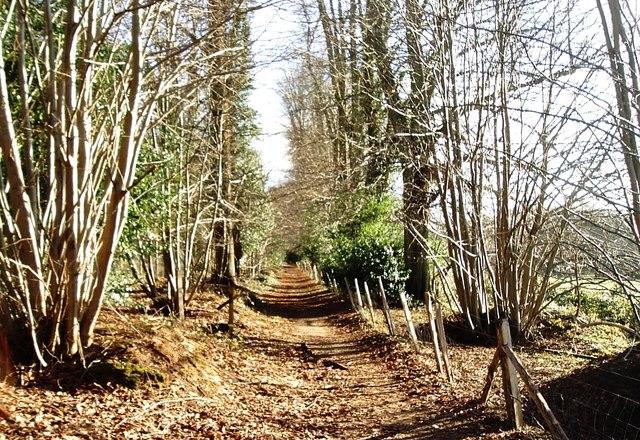 Greensand Way south-east of Farnham