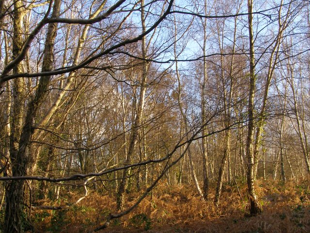 Scrubby woodland on Hamble Common