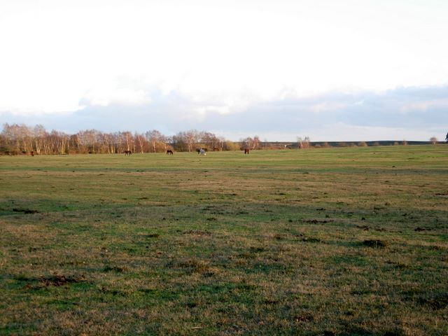 Close grazed area