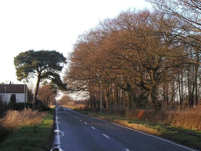 The Melbourne to Elvington road