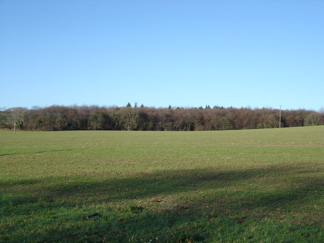 View towards Kingsland Copse