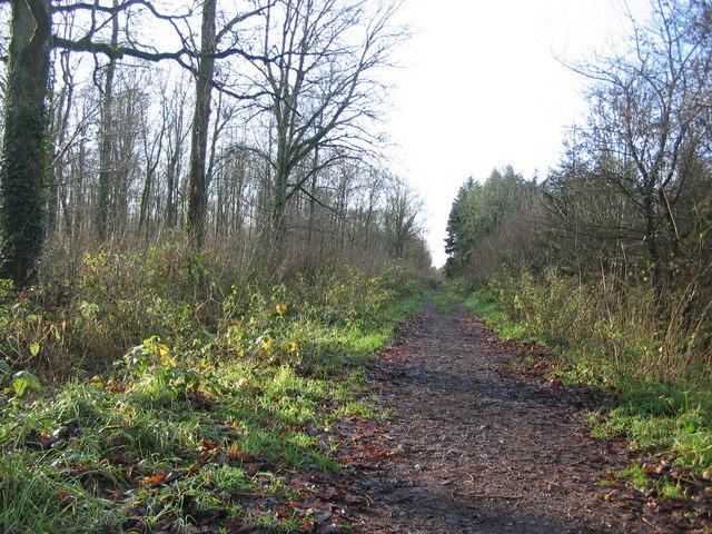 Track through Black Dog Woods