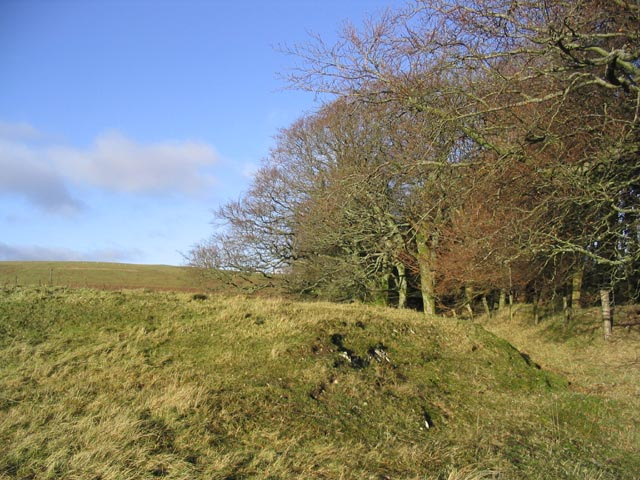 Woodland edge at Watch Knowe