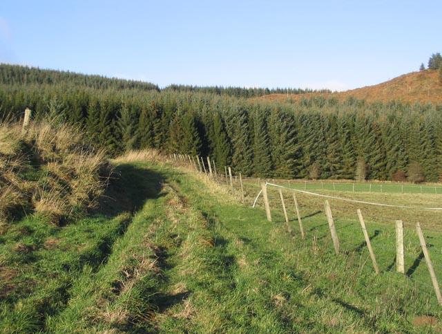 A grass track