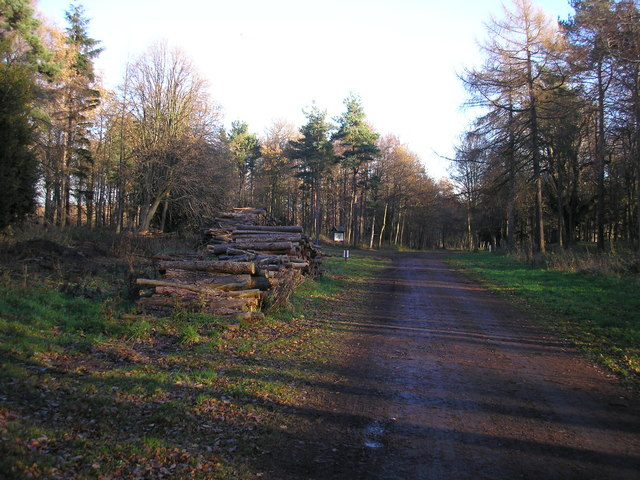 Piles of Logs in Dalkeith Park