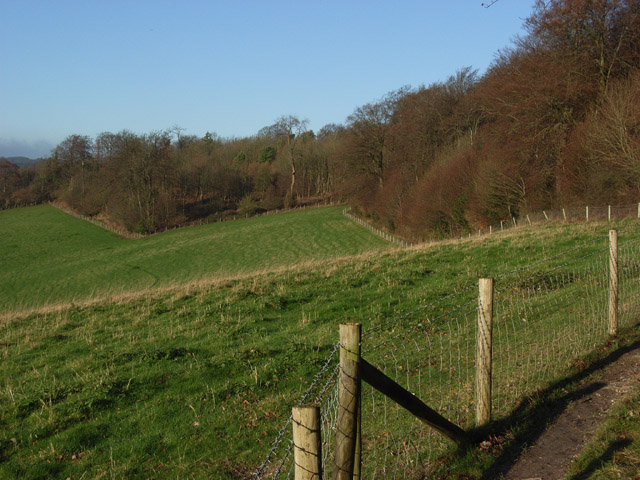 Woodland above Turville