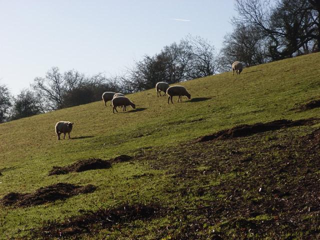 Pasture, Ibstone