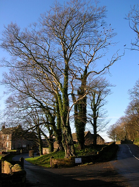 Trees at Brieryside