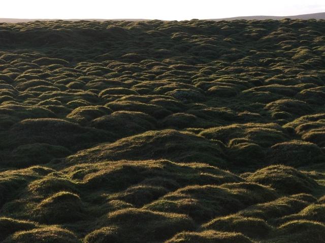 Bumpy Grass.