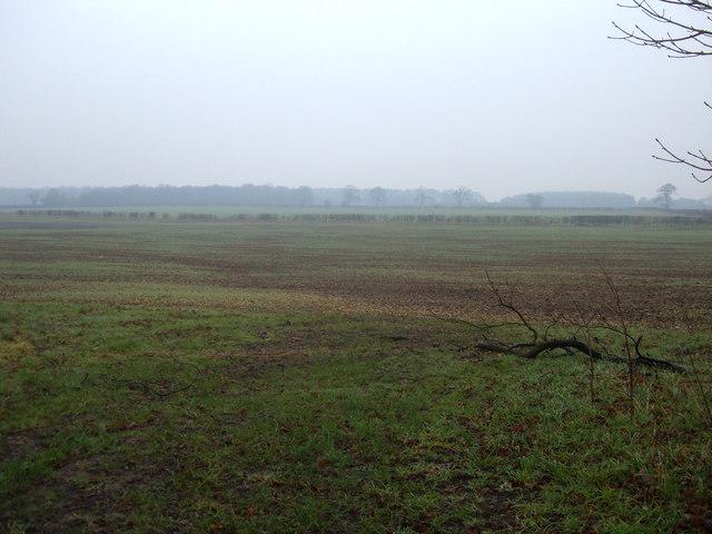 Farmland off Wighill Lane