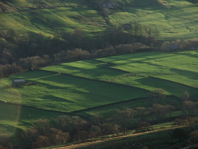 Fields in Bishopdale.