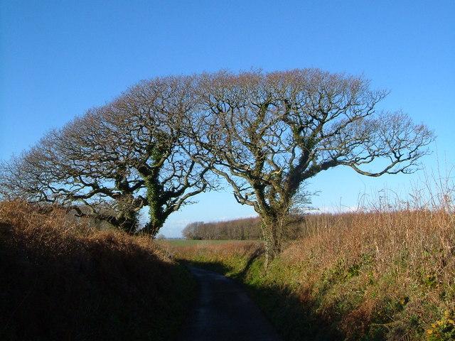 Trees near Marland Cross