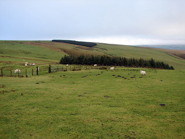 Upland pasture at Lluest Dropyns