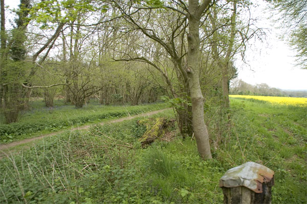 Bonsley Woods