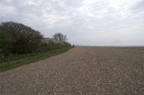 Field by Wessex Ridgeway