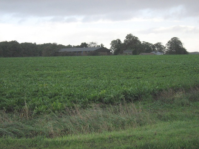 Sugar Beet At White Cross
