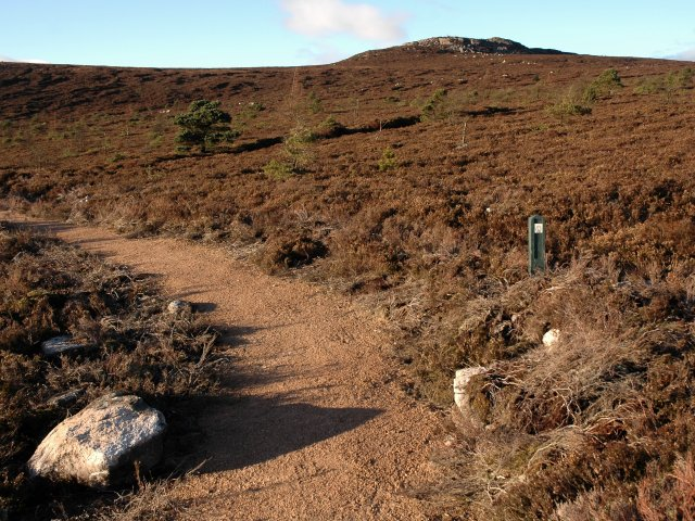 Heather Moorland and Gordon Way Footpath