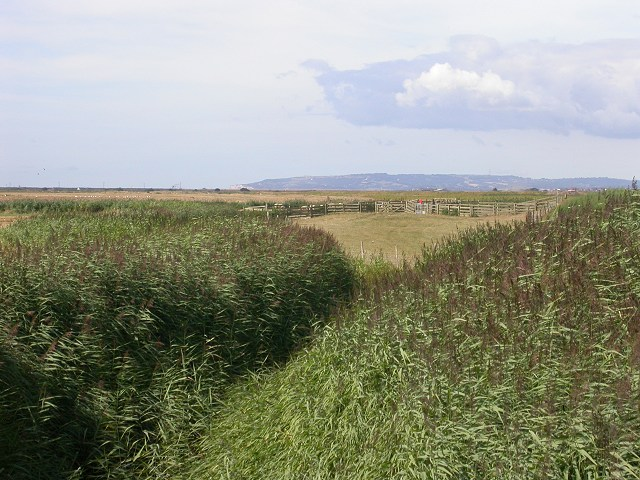 Sheep fold on the edge of Scotney Petty Sewer, Lydd.