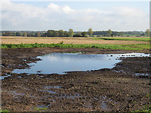 TG0700 : A Big Puddle by Roger Gilbertson