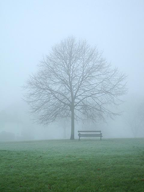 Misty Tree on Horfield Common