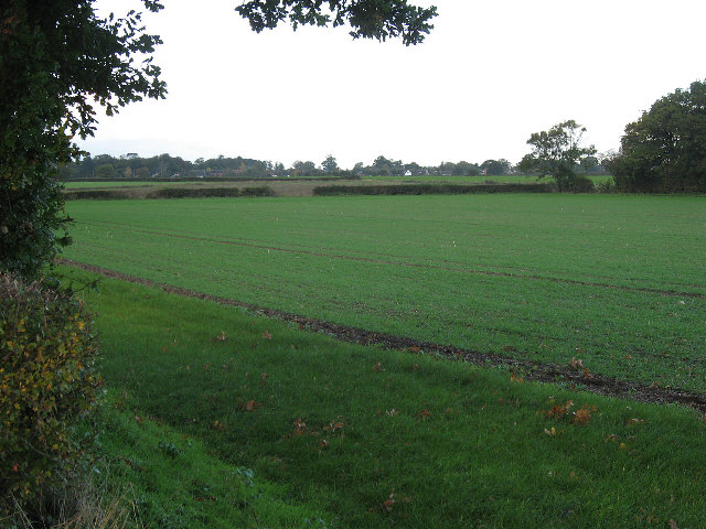 Towards Barnham Broom