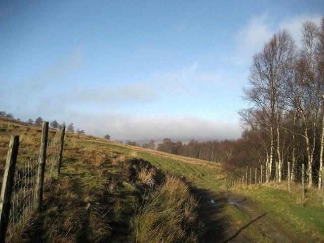 Top end of Kirk Gill Moor Wood