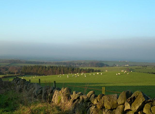 Tranew Farm View