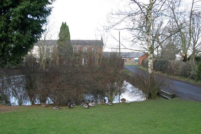 Eland Hall Farm duckpond