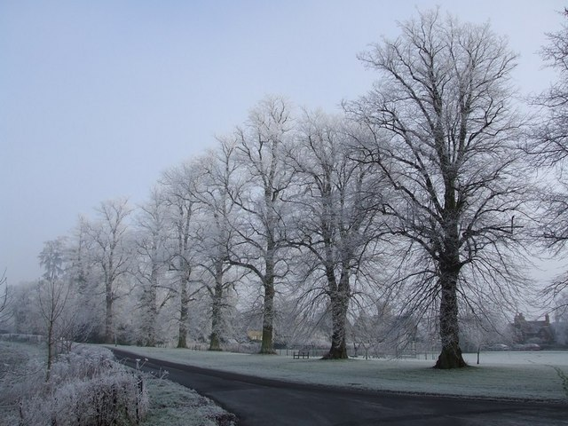 Hoar-frosted Trees, Mentmore