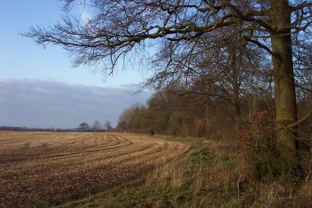 Fields and woodland off Akeman Street