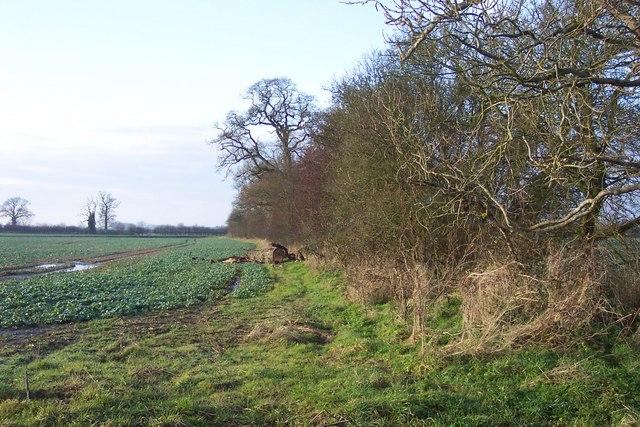 Felled tree in the hedgerow