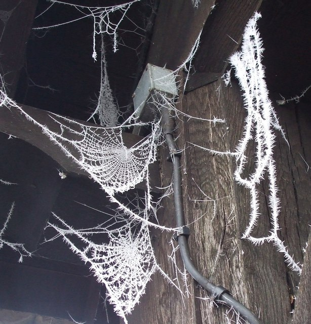 Hoar-frosted cobwebs, The lychgate, Wing