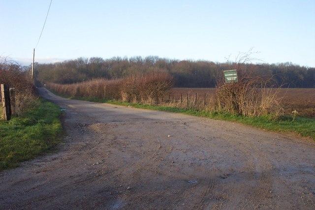 Track to Macaroni Wood