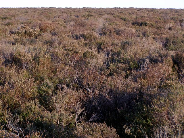 Heathland, Handy Cross Plain, New Forest