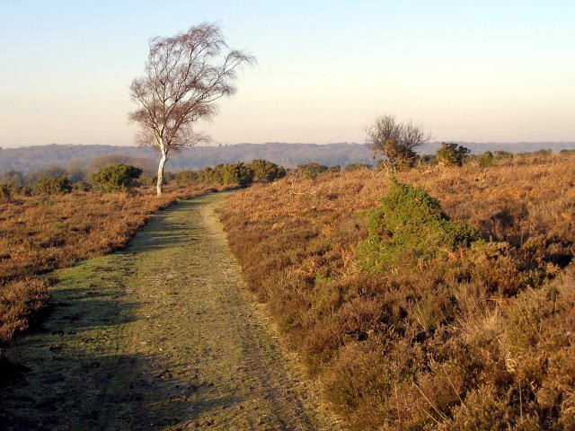 Path through heathland, Marrowbones Hill, New Forest