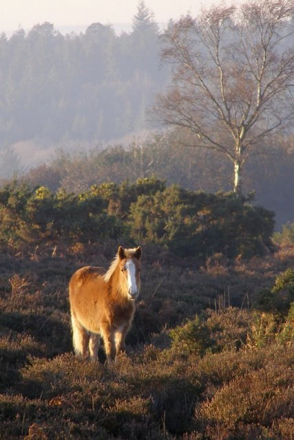 Foal on Marrowbones Hill, New Forest