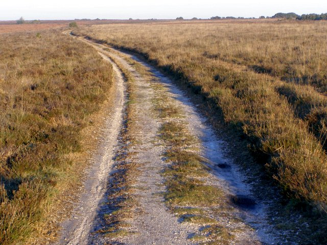 Track on Handy Cross Plain, New Forest