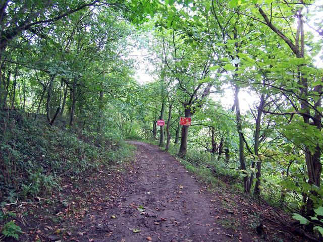 The Path through Hillside Plantation