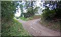 SE8721 : Track Junction in Hillside Plantation by David Wright