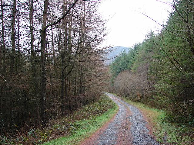 Forestry track near Hengwm-cyfeiliog